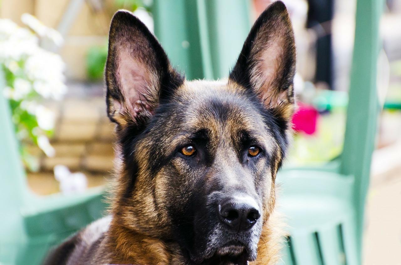 dog-218957_1280